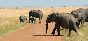 Africa; Kenya; elephant; savannah; road